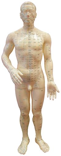 Model med akupunktur punkter og meridianbaner